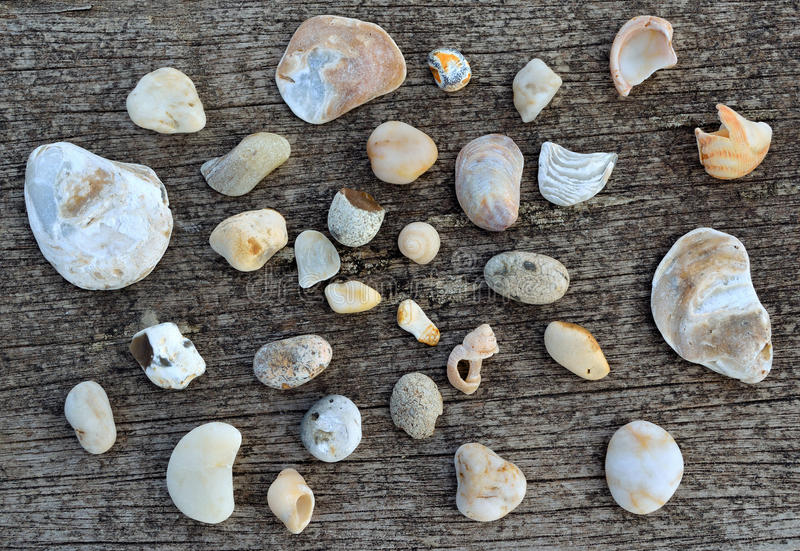 White Shells And Pebbles on rustic wood stock images