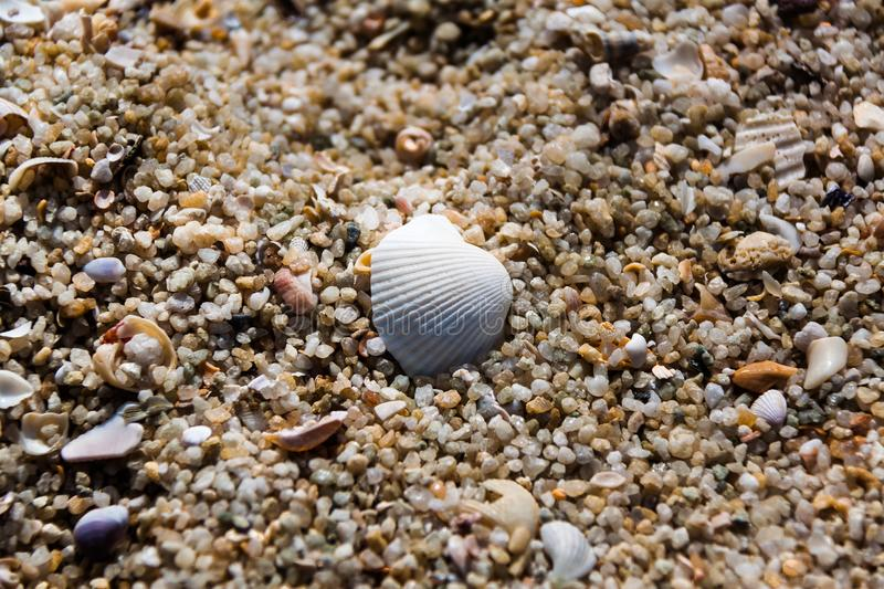 White shells with stones/rocks, sands, little pieces of wood. royalty free stock images
