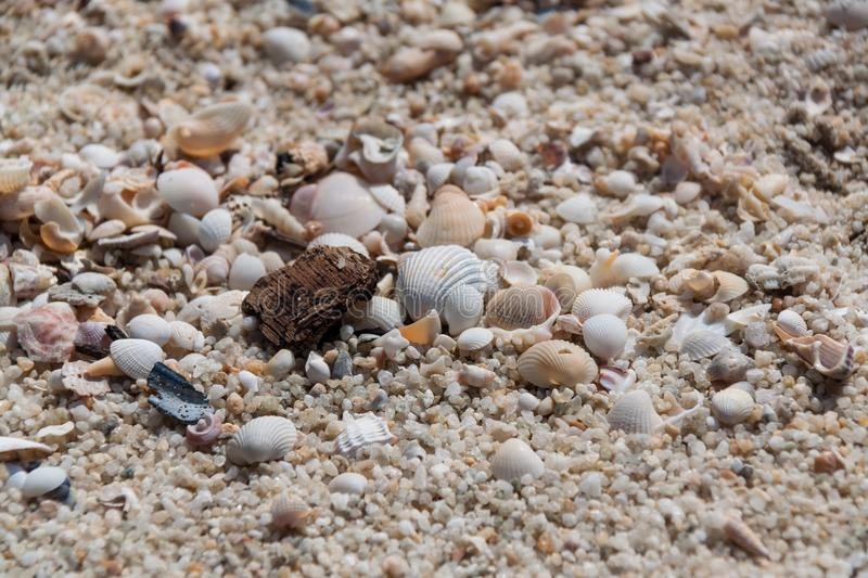 White shells with stones/rocks, sands, little pieces of wood. stock photos