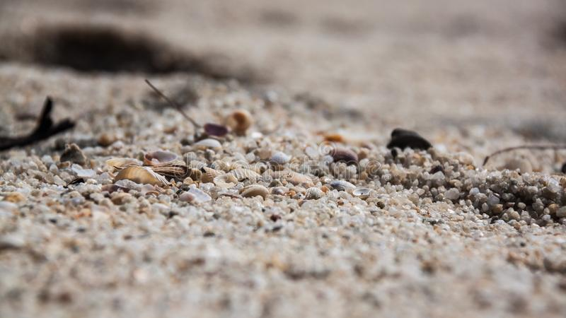 White shells with stones/rocks, sands, little pieces of wood. stock photography