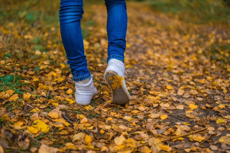 A man stops walking. The girl`s girlfriend`s. Hot girls on the nature in the park among the leaves of yellow. Autumn. White Shoe Sneakers. A man stops walking stock photography