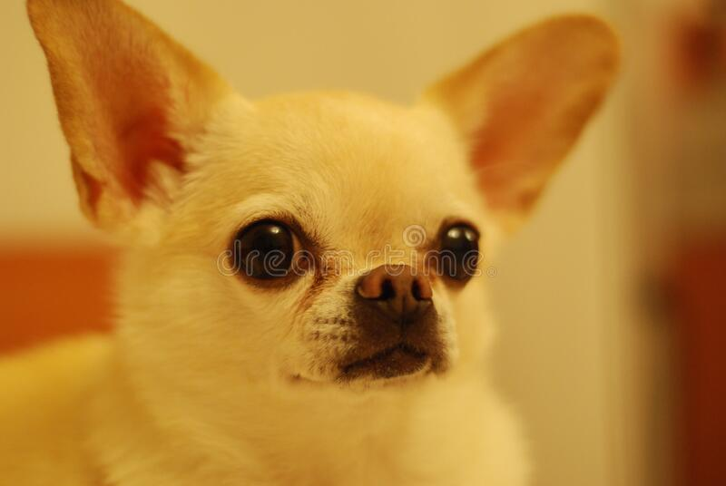 White Short Coat Dog Free Public Domain Cc0 Image