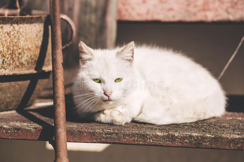 White Short Fur Cat Near Brown Metal Rod royalty free stock photo