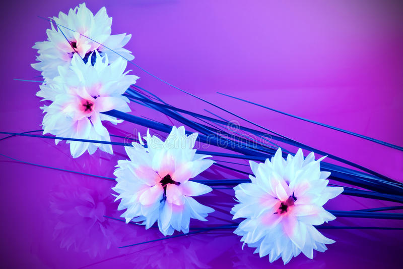 White silk flowers. On a shiny mauve background royalty free stock image