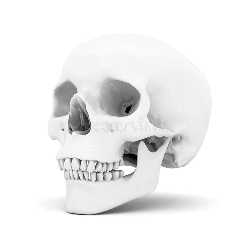 Download White skull stock illustration. Illustration of head - 26960956