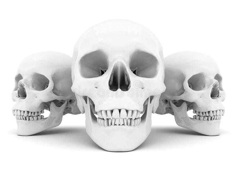 Download White Skull Royalty Free Stock Image - Image: 26960966