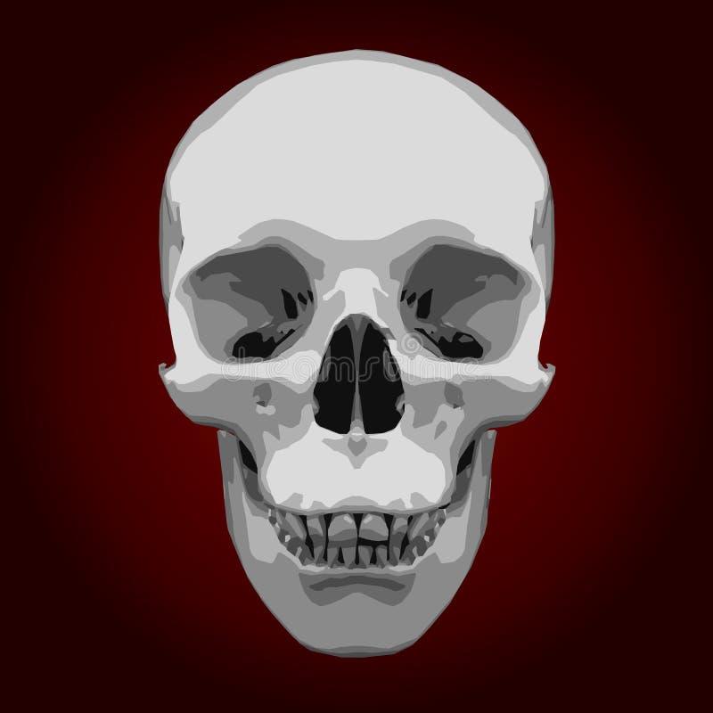 White skull vector illustration