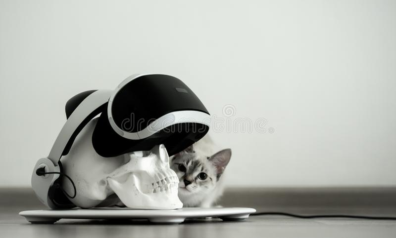 White skull on a stand in a VR helmet. Gray cat Digital concept. stock image