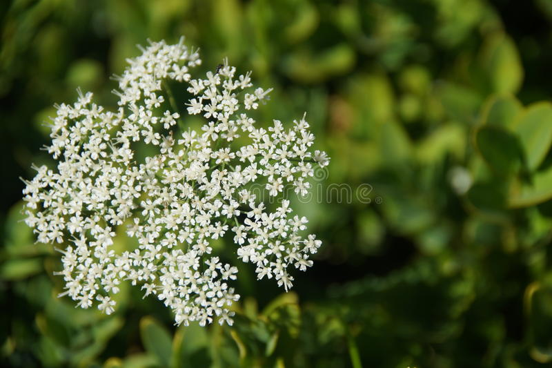 White small flowers on green background stock photo image of download white small flowers on green background stock photo image of growth garden mightylinksfo