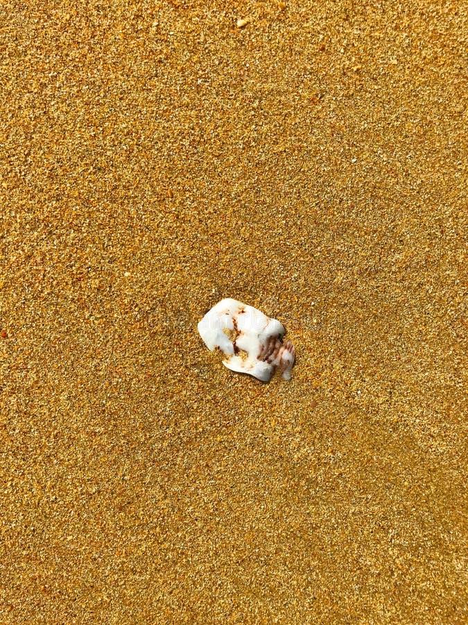White small stone on the golden sand stock photos