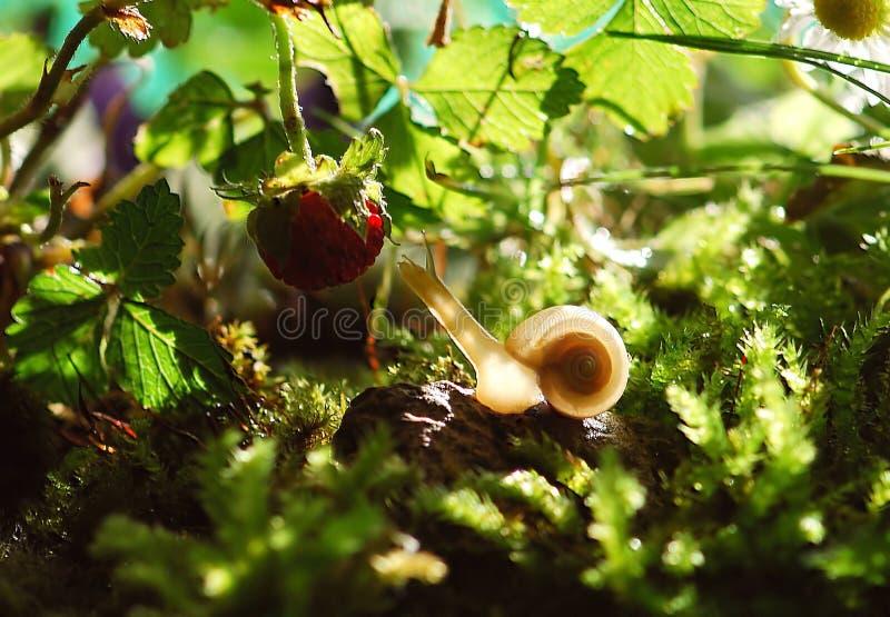 White Snail Near Red Fruit Free Public Domain Cc0 Image