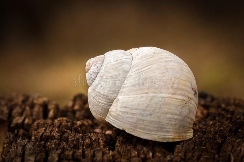 White snail shell in forest royalty free stock photography