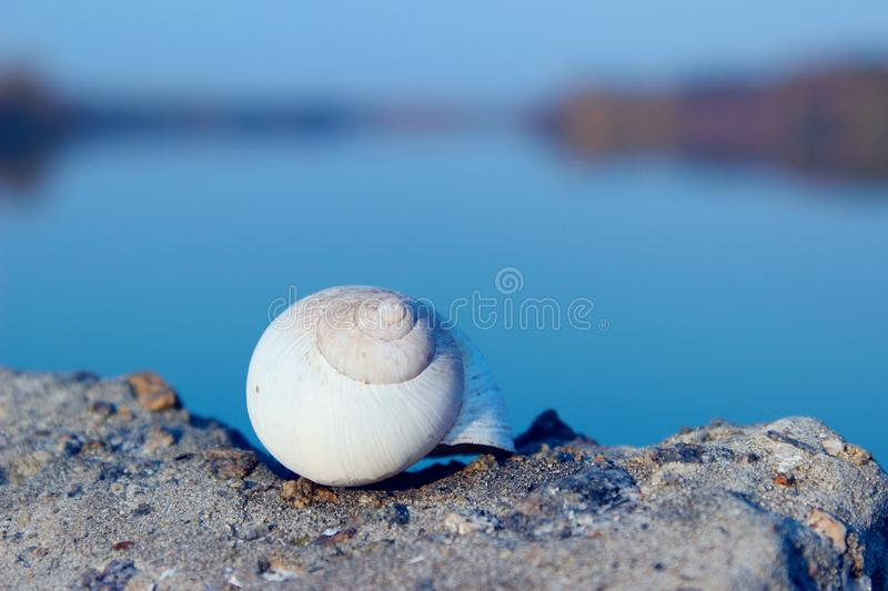 White snail shell on a stone over blurred river background. Abstract nature backgroud. Summer, nature, travel concept royalty free stock photography