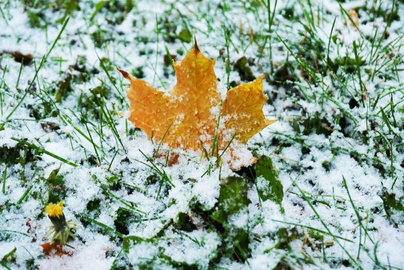 White snow before autumn leaves royalty free stock photos