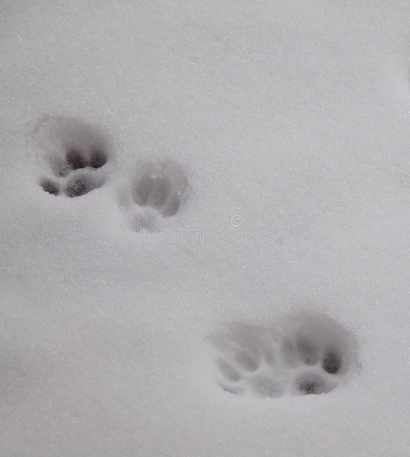 White, Snow, Black And White, Freezing stock photos