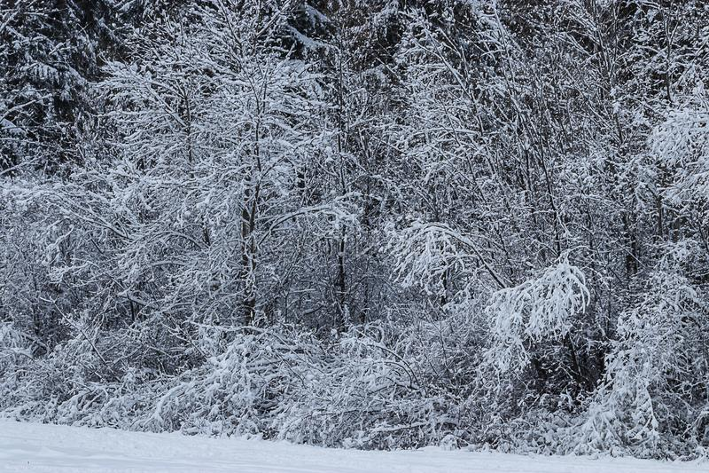 White snow covering a forest treeline and park royalty free stock photos
