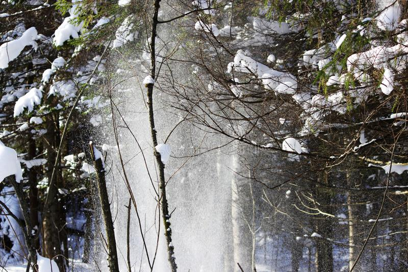 White snow is falling from the tree with a twig in the forest from the wind after the snowfall the day before. looks like a ghost. White snow is falling from stock photo