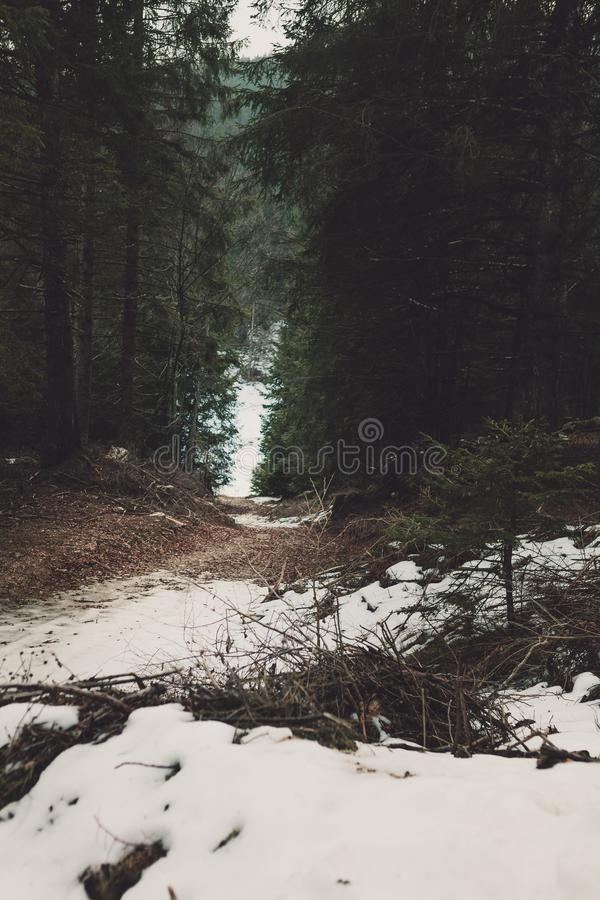 White Snow in Between Forest stock images