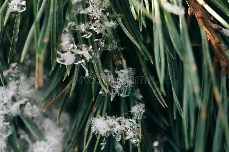Download White Snowflakes On Green Leaves Stock Photo - Image of stock, winter: 83021420