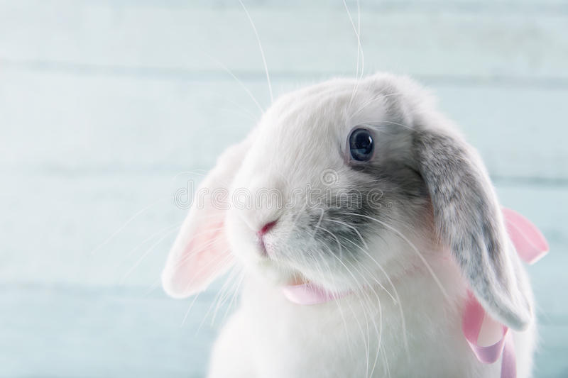White soft bunny rabbit stock images