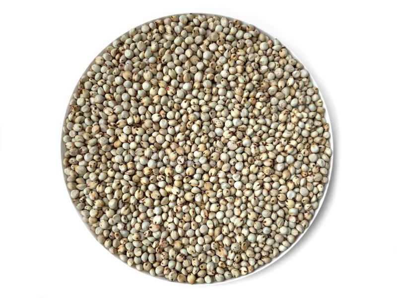 White Sorghum seeds stock images