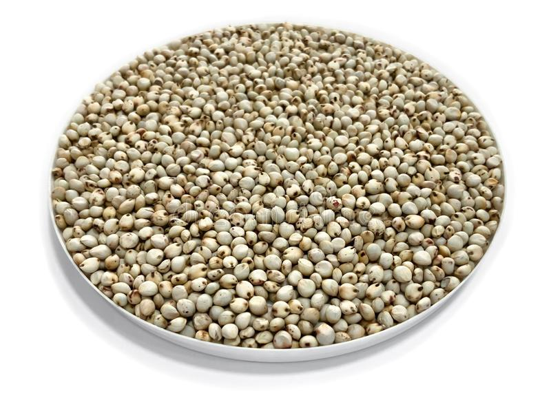 White Sorghum seeds royalty free stock images