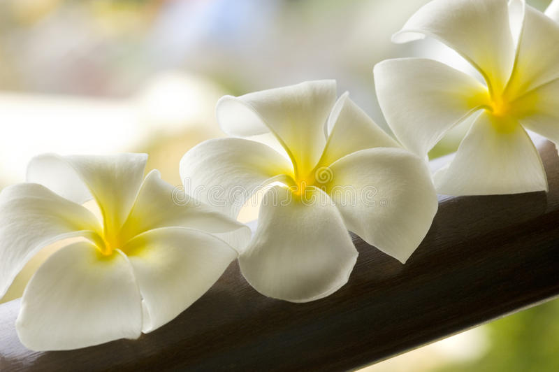 White spa flower in a brown bowl with stock photos