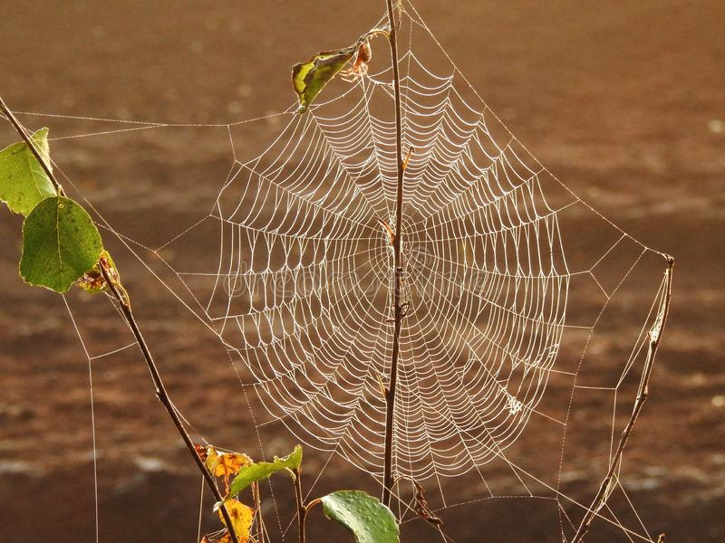 White spider net with morning dew, Lithuania stock images