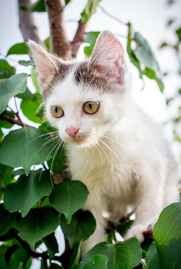 A white spotted kitten sits on a tree in a thick leaf_ royalty free stock images