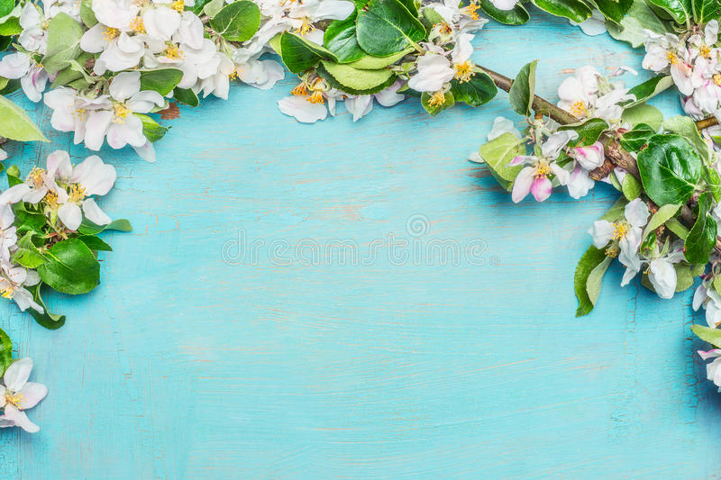 White Spring blossom on blue turquoise wooden background, top view, border. Springtime stock photo