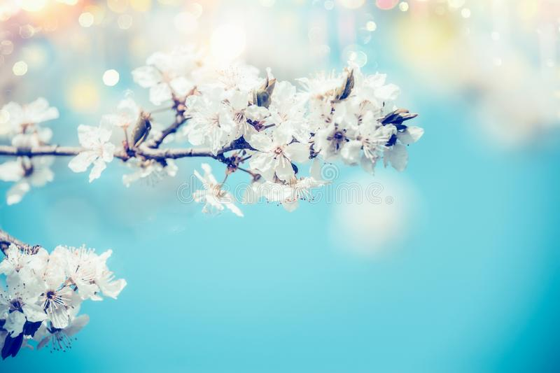 White spring cherry blossom on blue background with bokeh and sunlight, close up. Abstract floral springtime nature , outdoor royalty free stock photography