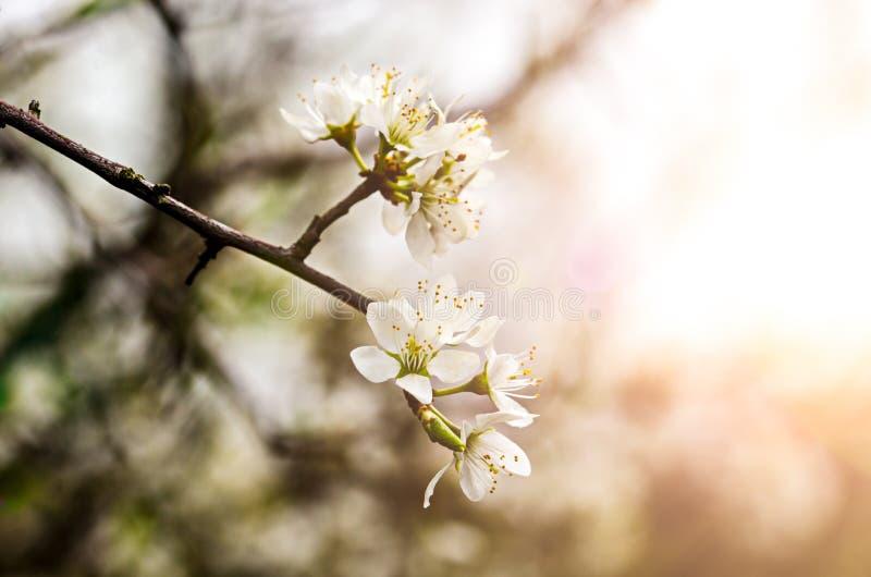 White spring flowers stock photo