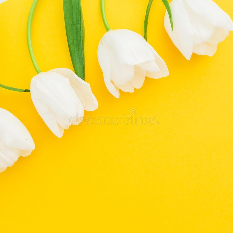 White spring flowers on yellow background. Flat lay, top view. Floral frame background. White spring flowers on yellow background. Flat lay, top view stock photography
