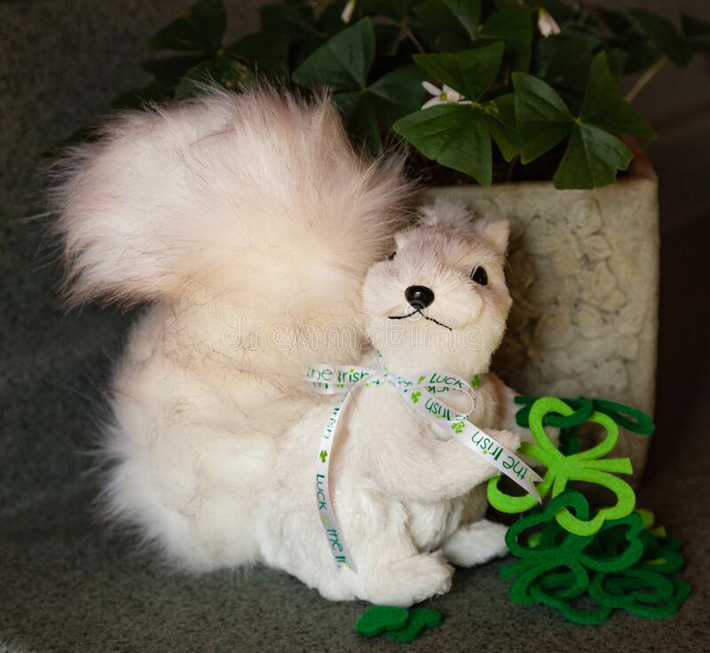 White squirrel with St. Patrick`s Day themed objects. stock images