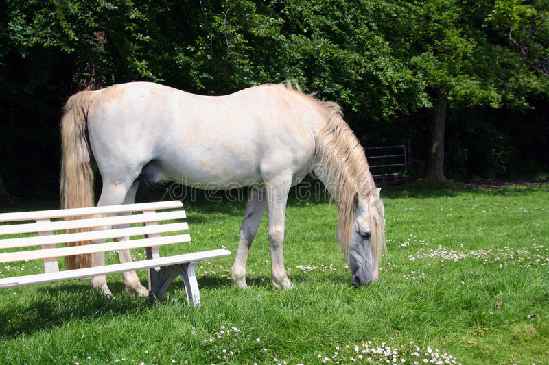 White stallion and bench stock photos