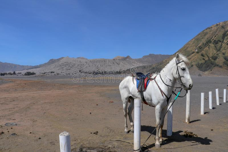 White stallion with harness tied to a pillar on a sandy plain near the crater of Batur volcano. Horse stands between white columns stock photo