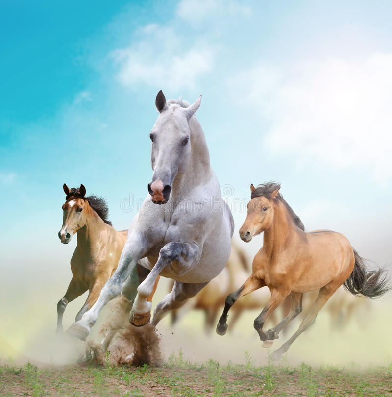 Download White Stallion And Herd Royalty Free Stock Images - Image: 27127249