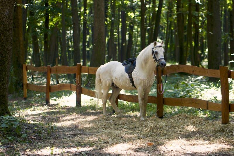 White Stallion stock images