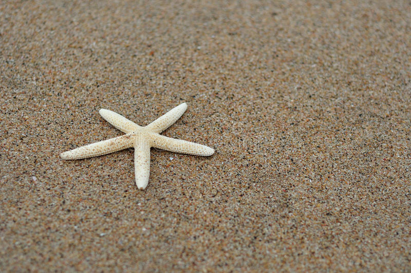 White starfish on the beach. A white starfish on the beach stock photography