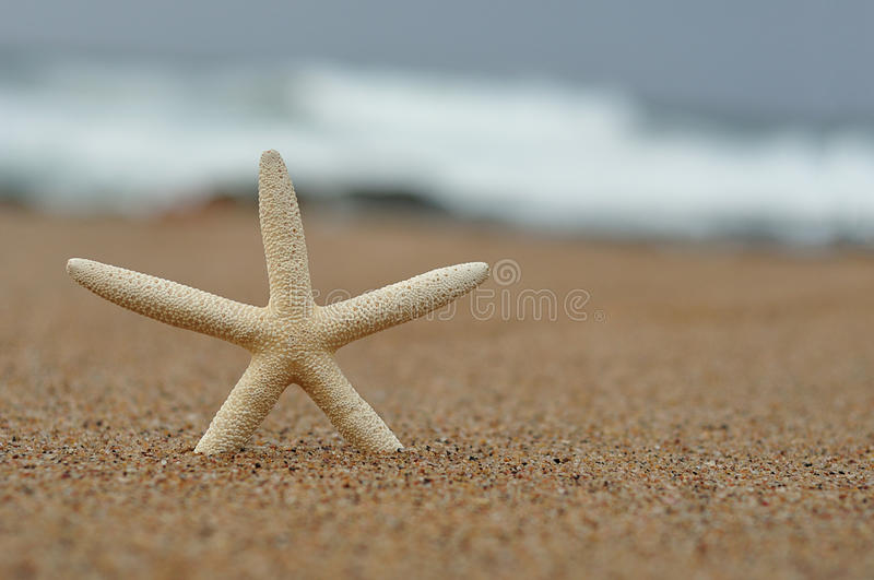 A white starfish on the beach. With the ocean out of focus in the background stock photography