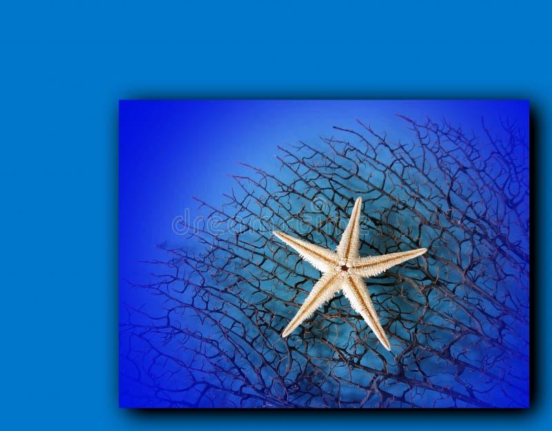 White starfish stock photo