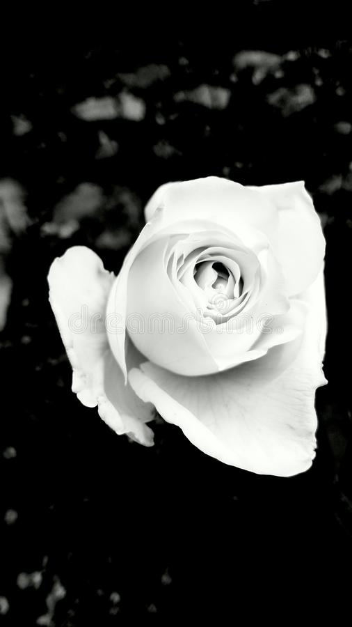 White is still white royalty free stock photo