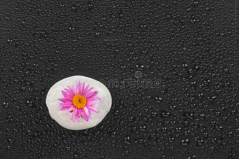 Download White stone with flower stock image. Image of concept - 33773745