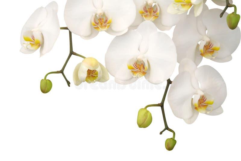 white storczykowy fotografia stock
