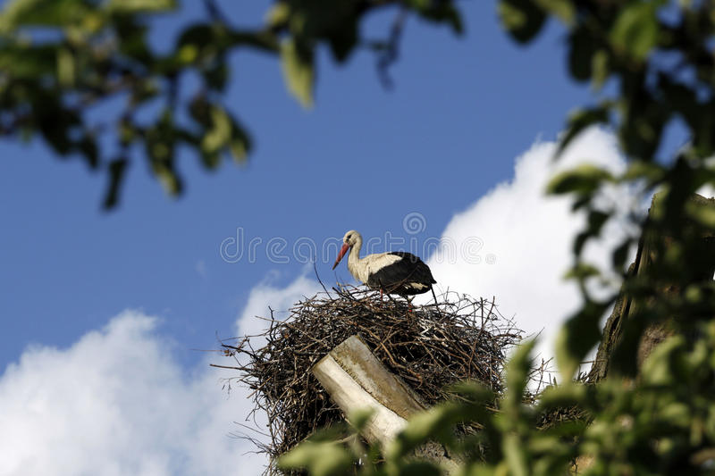 Download White stork stock photo. Image of spring, plant, twigs - 14856258