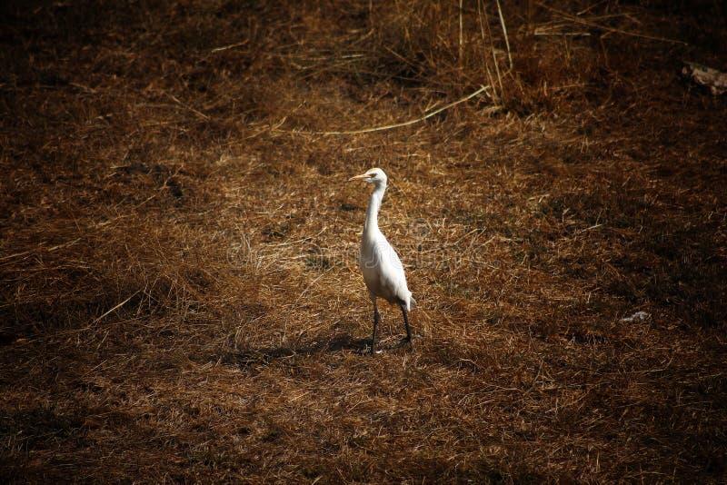 White stork. Stork , bird photography, canon stock photography