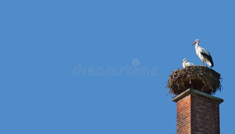 White stork family. stock image