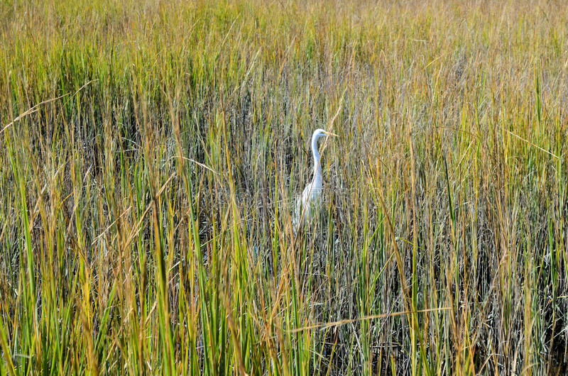 Download White Stork Marsh Tall Green Grass Stock Photo - Image: 27498502