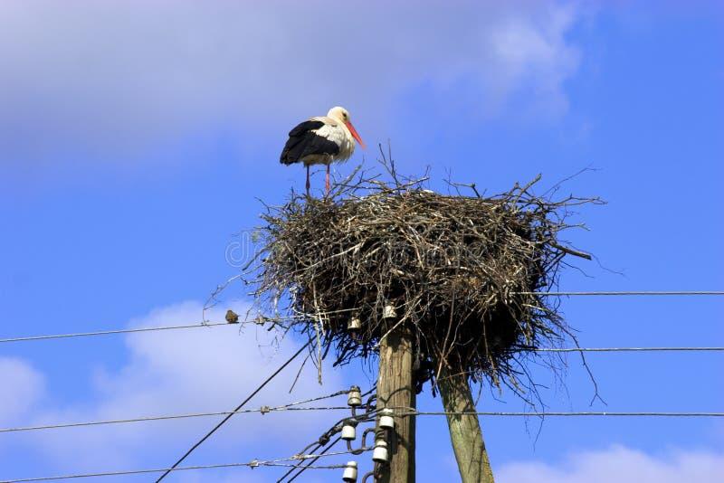 Download White Stork in nest stock image. Image of sunlit, flying - 3080975