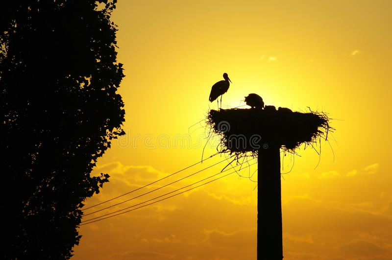 White Stork nest in the sunset royalty free stock photos